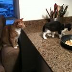 The Cat Lady Cometh
