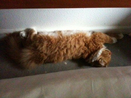 This is Walter sleeping with his paws to the wall. It has nothing to do with plagiarism.