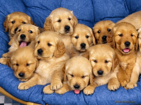 Who wouldn't want a room full of puppies at a party?