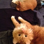 Both cats helping me do fold the laundry.
