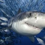 Sharks Can Tweet Too