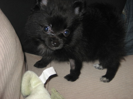 Jasper Baby