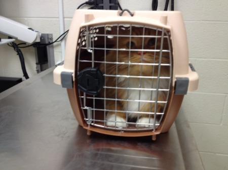 Walter at the vet.