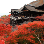 I Left My Heart in Kyoto's Fall Foliage