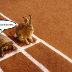 The Fallacy of the Tortoise and the Hare