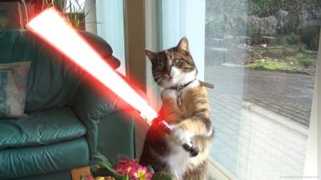 sith-lightsaber-cat