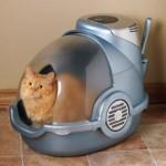 The Cat Litter Study