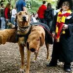 How I Saw Harry Potter 7.2