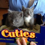 The Hunger Games of Cuteness