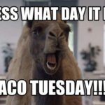 Is Tuesday Really the Best Day for Tacos?