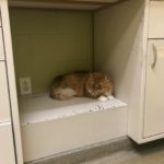 How Often Do You Take Your Pets to the Vet?